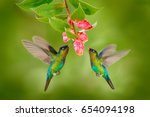two hummingbirds with pink... | Shutterstock . vector #654094198