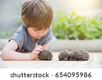 little boy playing with hedgehog | Shutterstock . vector #654095986