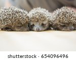 three little hedgehog portrait | Shutterstock . vector #654096496