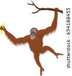 vector orangutan   Shutterstock .eps vector #654188455