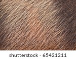 A Closeup Of Wild Pig Skin And...