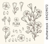 collection of flax plant seeds... | Shutterstock .eps vector #654229072