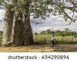 baobab malawi | Shutterstock . vector #654290896