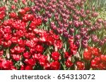 beautiful spring colorful... | Shutterstock . vector #654313072