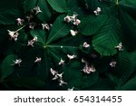 the layout of the green... | Shutterstock . vector #654314455
