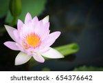 beautiful lotus flower   Shutterstock . vector #654376642
