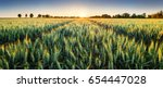 Wheat Field At Sunset  Panorama