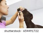veterinarian doctor is making a ... | Shutterstock . vector #654491722