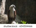 red hawk bird in the hard light | Shutterstock . vector #654504466