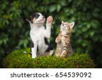 Stock photo little puppy with a little tabby kitten 654539092