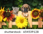 Stock photo little puppy with a little tabby kitten in the garden 654539128
