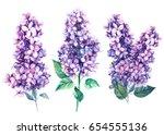 Flowers Lilac  Botanical...