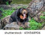 Behavior Of Malayan Sun Bear.