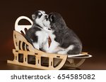 Stock photo two cute puppy siberian husky on a brown background in the studio 654585082
