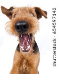 Small photo of Airedale Terrier dog catches funny treats wide angle