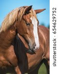 portrait of beautiful red horse | Shutterstock . vector #654629752