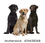three labrador sitting ... | Shutterstock . vector #654638368