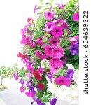Multicolor Petunias Flower...