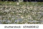 ephemeridae in danube delta ... | Shutterstock . vector #654680812