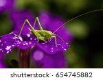green grasshopper on a purple... | Shutterstock . vector #654745882