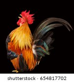 Colorful Rooster Isolated On...
