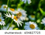 Nic Chamomile With Bee On...
