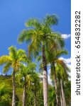royal palms against the sky  ... | Shutterstock . vector #654832282