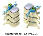 Human spine in details: Vertebra, bone marrow, disc and nerves. Isolated on white 3D image. - stock photo
