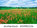 a field of blooming indian... | Shutterstock . vector #654982126