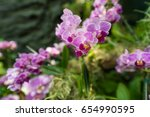 beautiful light purple...   Shutterstock . vector #654990595