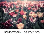 bright colorful tulips on... | Shutterstock . vector #654997726