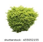 bush isolated on white... | Shutterstock . vector #655052155