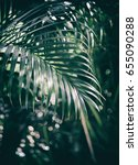 Tropical Palm Foliage  Dark...