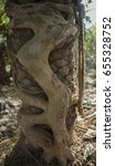 Tropical Banyan Tree Roots...
