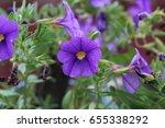 flower   Shutterstock . vector #655338292