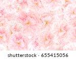 Sakura Flower Blossoms...