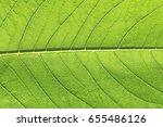 green leaf macro closeup close...   Shutterstock . vector #655486126