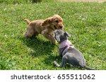cocker spaniel puppy  ... | Shutterstock . vector #655511062