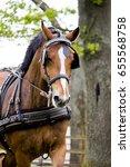 portrait of horse pulling... | Shutterstock . vector #655568758