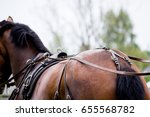 Close Up Of Horse Drawn...
