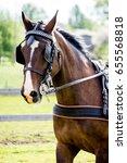 portrait of horse pulling... | Shutterstock . vector #655568818
