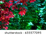 backlited red leaves in a red... | Shutterstock . vector #655577095