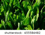 background with juicy green... | Shutterstock . vector #655586482