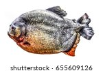 fish piranha isolated | Shutterstock . vector #655609126