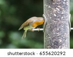 european robin  erithacus... | Shutterstock . vector #655620292