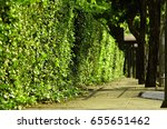 green hedge fence  select focus ... | Shutterstock . vector #655651462