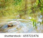 white swan swimming on green... | Shutterstock . vector #655721476