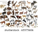 Illustration With Animals...