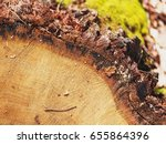 extreme close up of timber tree ... | Shutterstock . vector #655864396