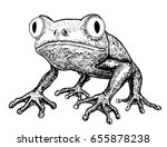 Toad  Frog  Vector  Drawing Of...
